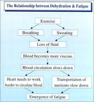 The Relationship between Dehydration & Fatigue